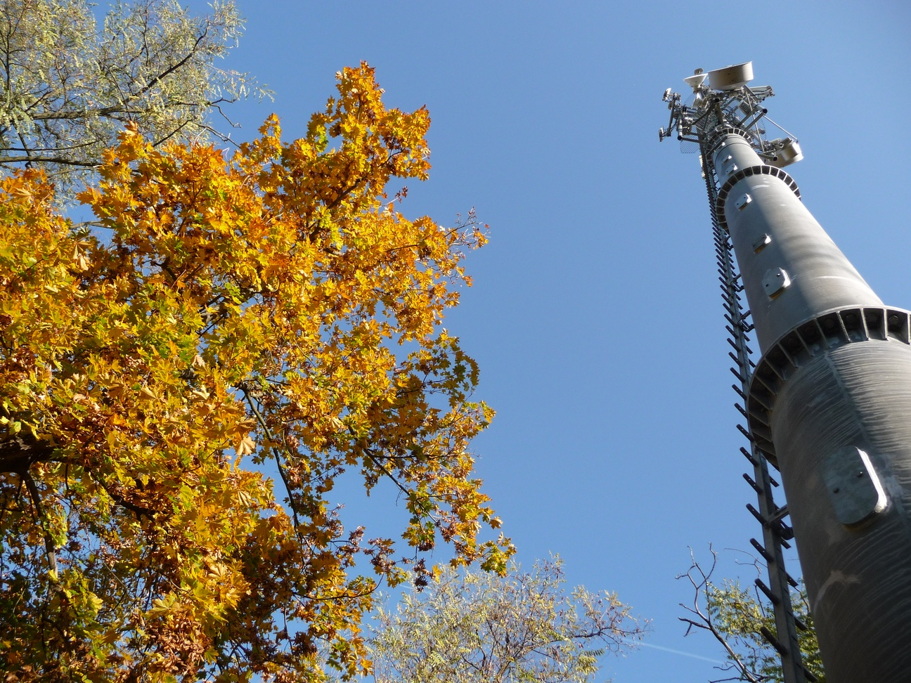 monopole_autumn